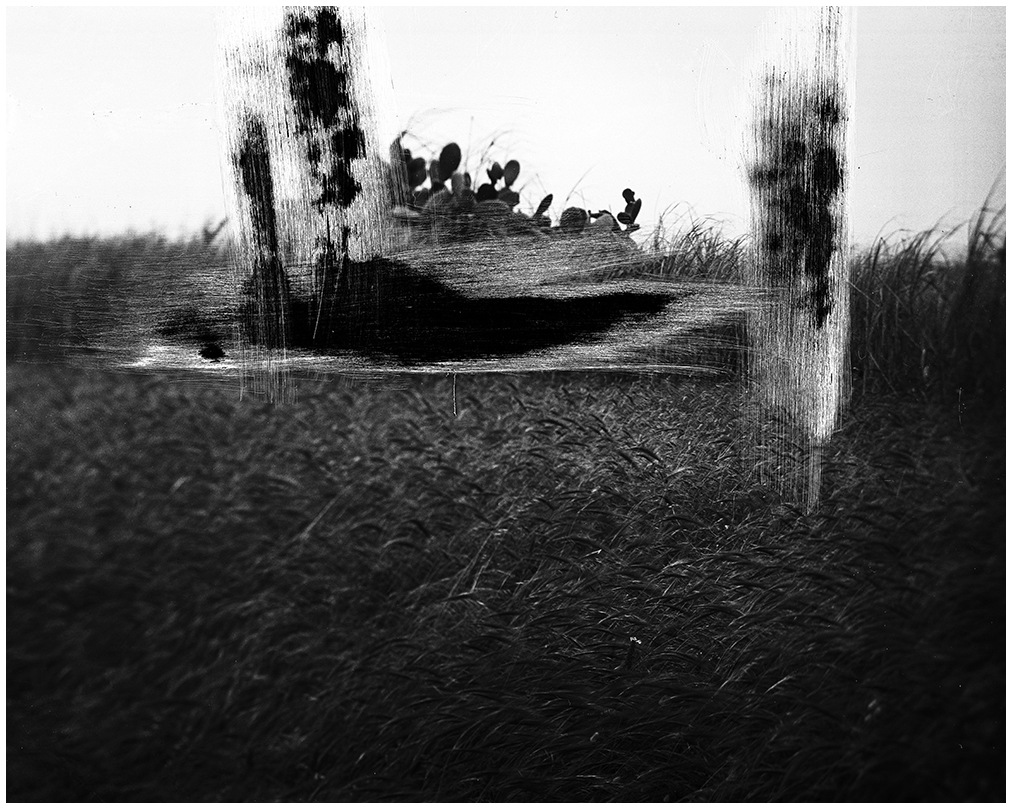 The filed of prinkly_1, 2013 – Gelatin silver print  – 50x60 cm – edition of 7